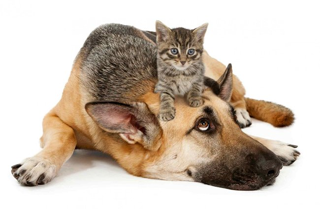 a dog with a cat sitting on its head